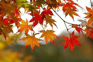 Fall-leaves-main_Full